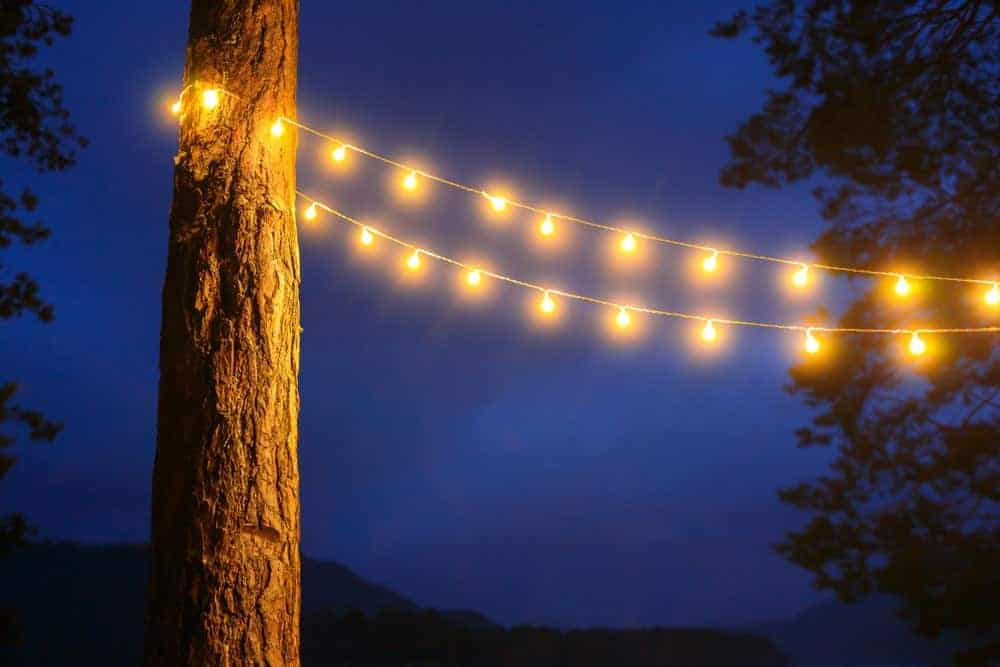 String lights attached to a tree.