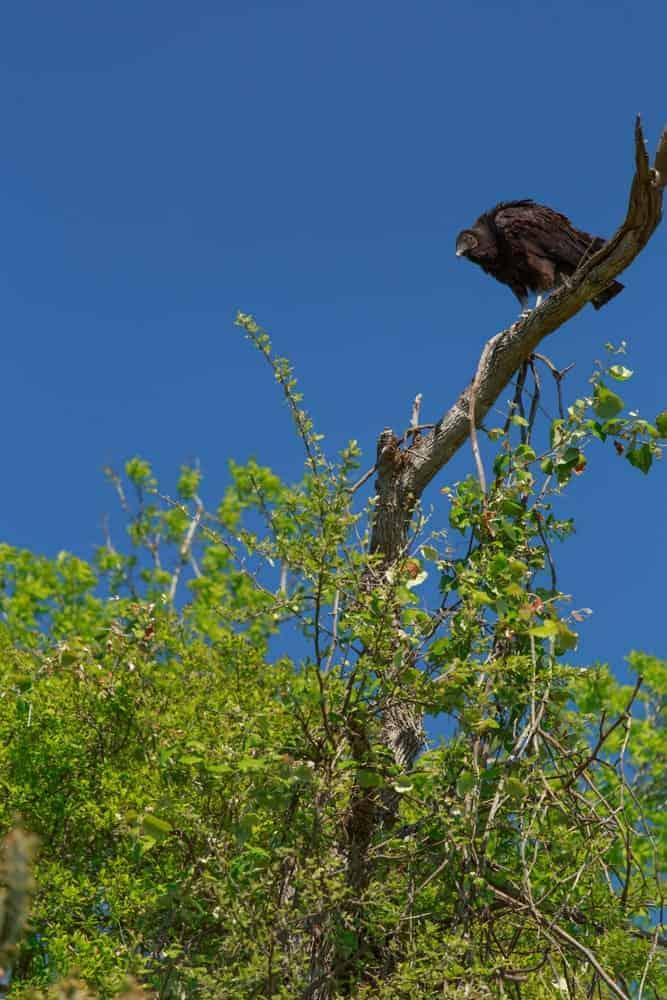 Bastrop County Nature Park