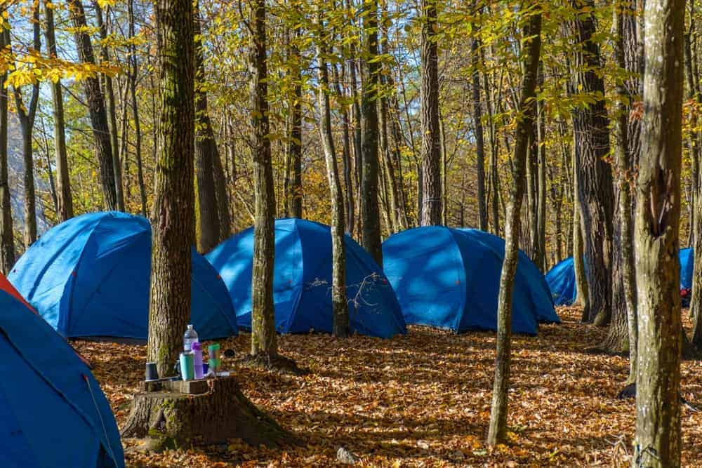 A cluster of blue camping tents in a wooded area.