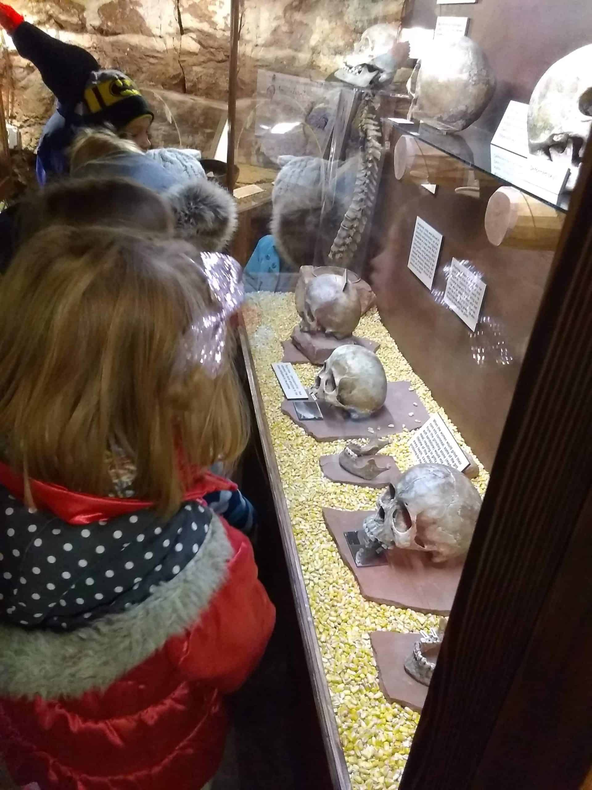 Children looking at a skull display at Cliff Dwellings Museum.