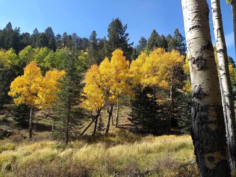A look at the fall colors of the surrounding trees.