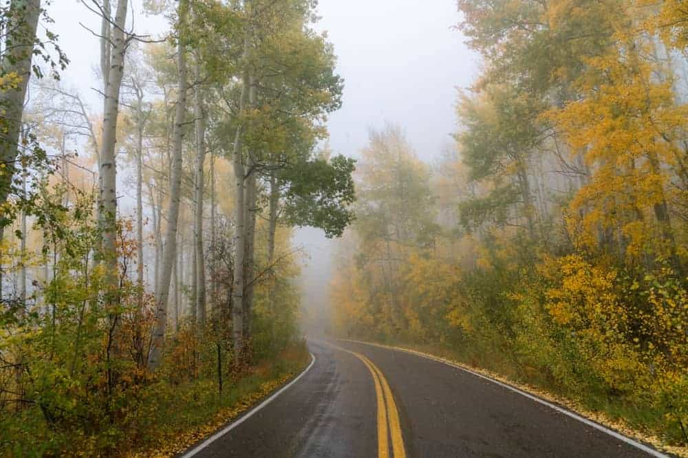 A misty road in Colorado with tall trees flanking the road.
