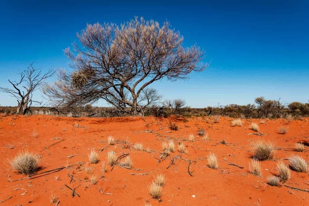 A view of the landscape of the Australian outback.
