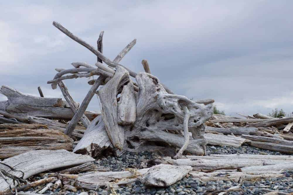 A bunch of driftwood on the sea coast of Whidbey Island.