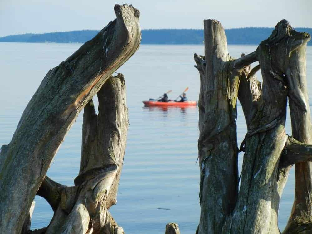 Driftwood on the foreground and a background of two men on a kayak.