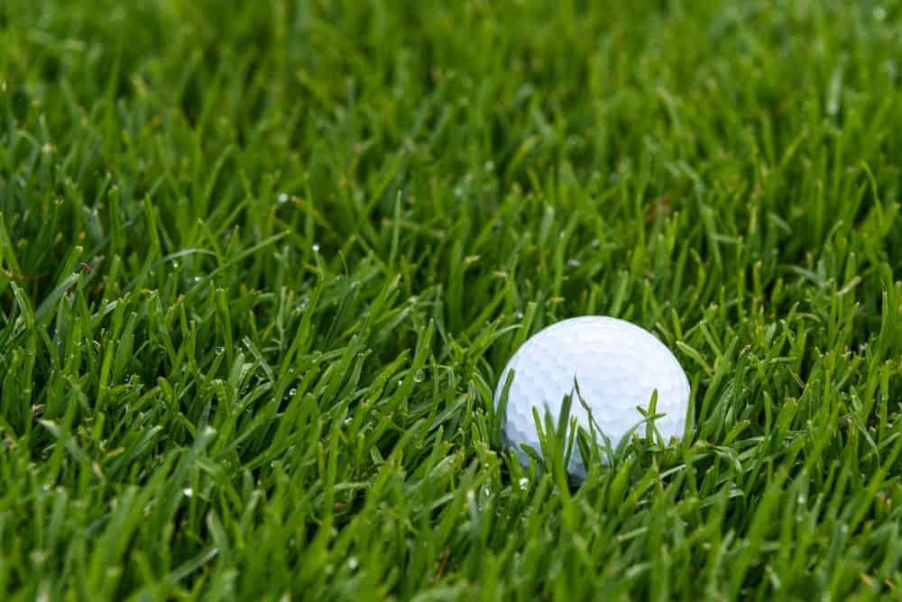 A golf ball on green grass.
