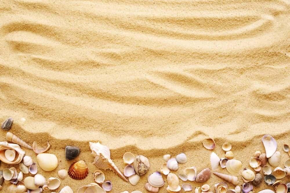 A close look at seashells on sand.