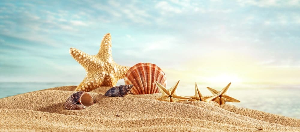 A variety of seashells on the sand.