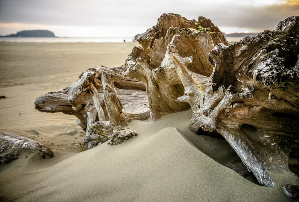 A close look at driftwood half buried on the sandy beach.