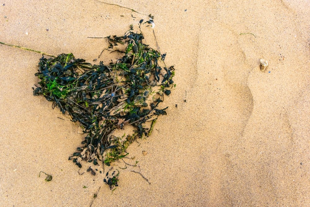 A close look at a clump of seaweeds on the beach.