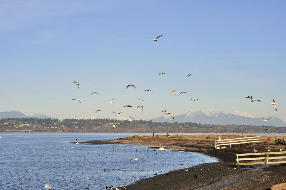 Blackie's Spit which is a beach peninsula at Crescent Beach in South Surrey, BC.