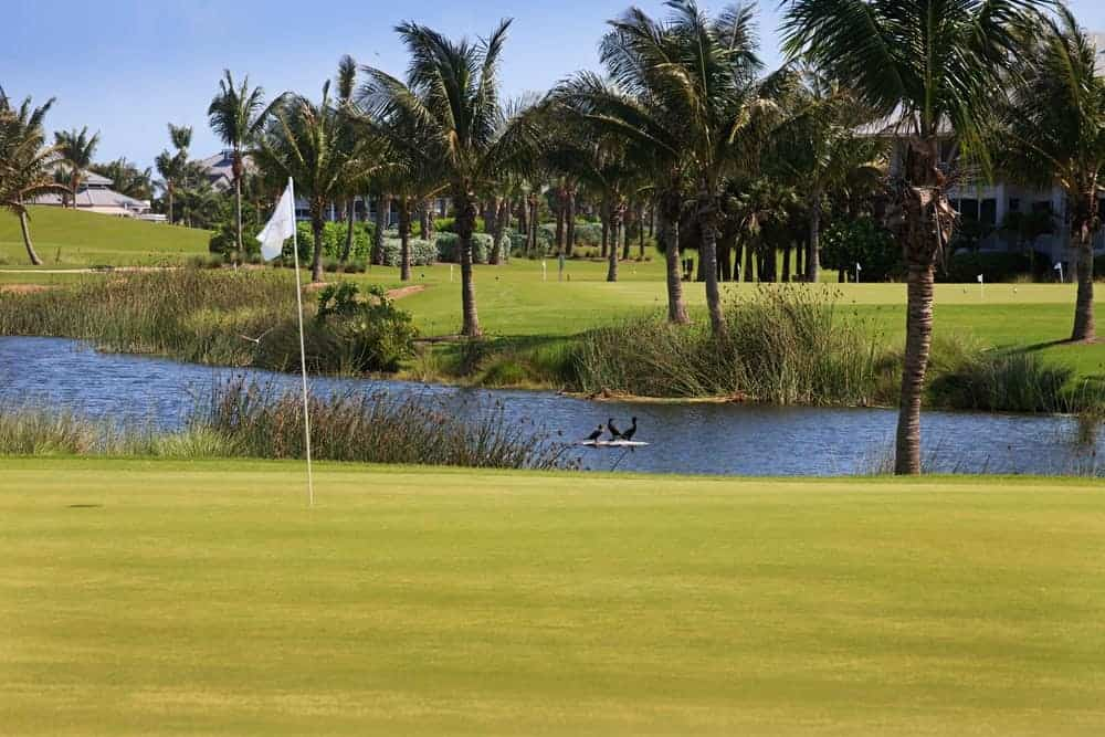 Cimarrone Golf Club is a semi-private course that has been named one of the top 100 golf courses in the whole state of Florida. It also offers lots of amenities.