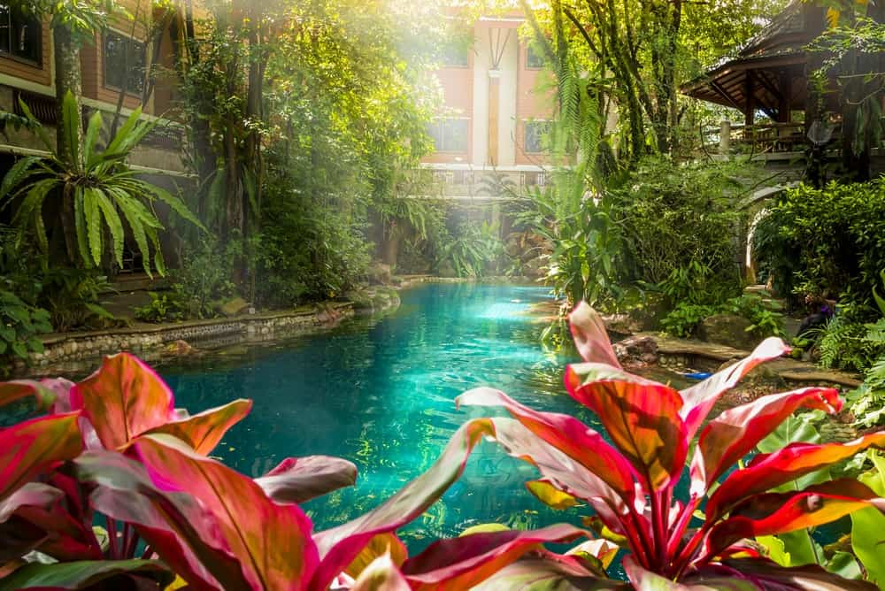 A look at the jungle-style pool and garden of a luxury hotel.