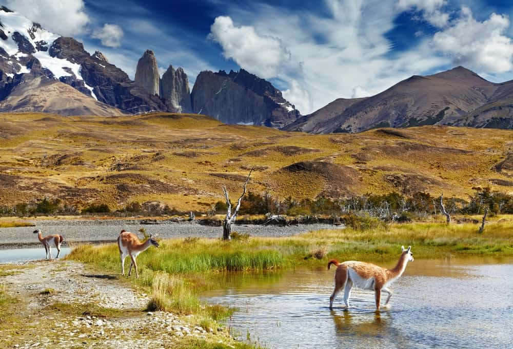 A look inside the Torres del Paine National Park in Patagonia.