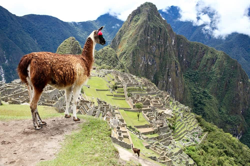 An overlooking view of Machu Picchu with a llama.
