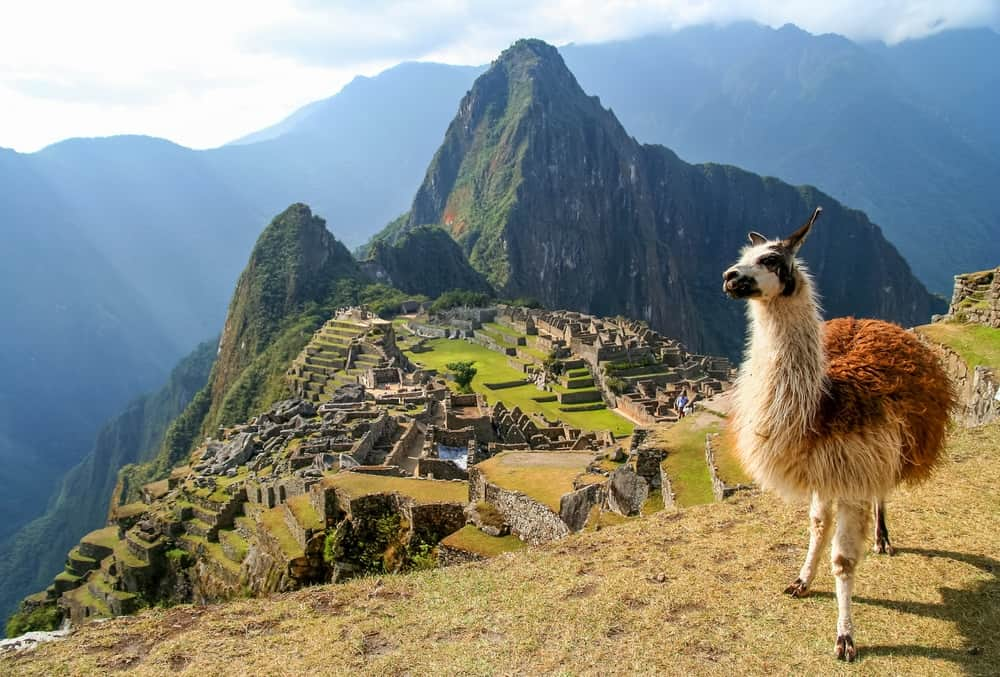 A llama in front of the the view of the ancient inca town of Machu Picchu.