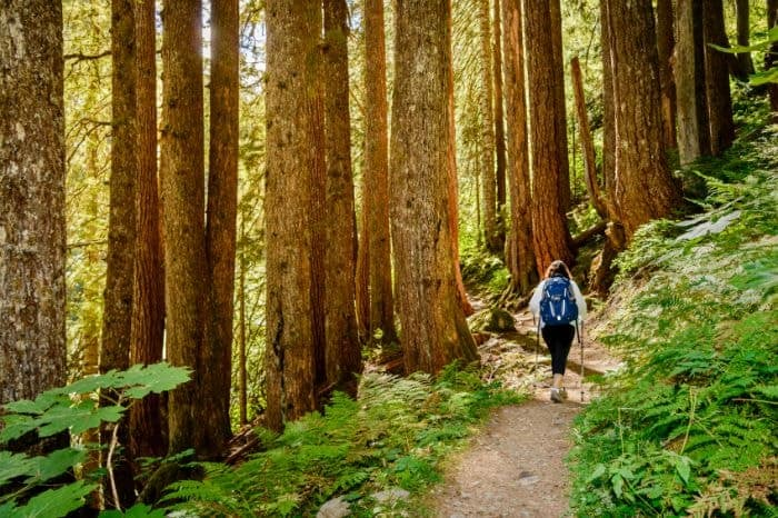 A woman hiking in the forest using trekking poles.