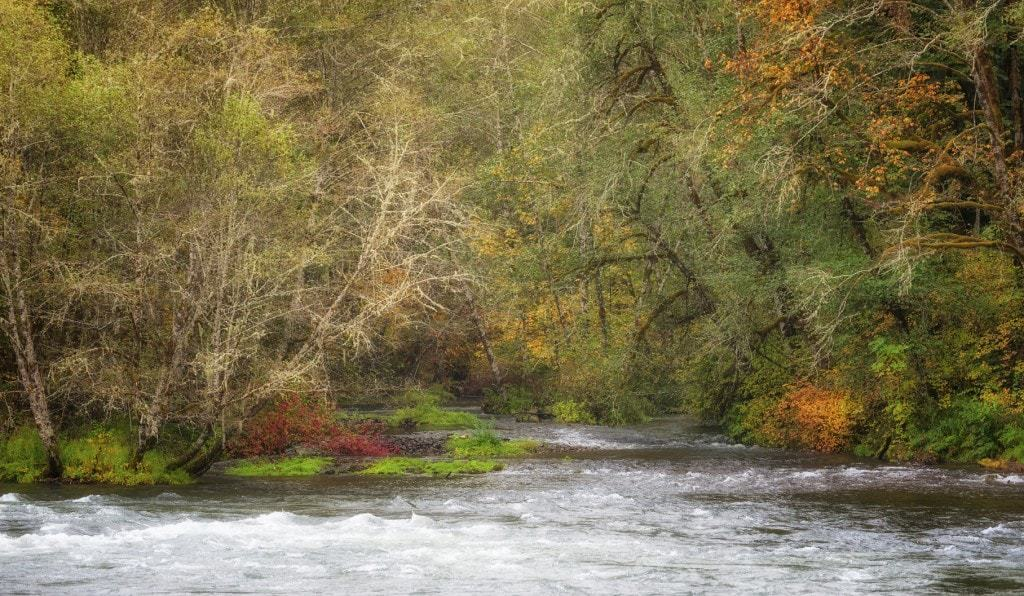 An autumn scenery along the banks of the McKenzie River.