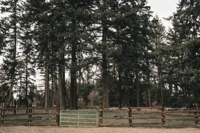 A look at the tall trees of Fir Grove.