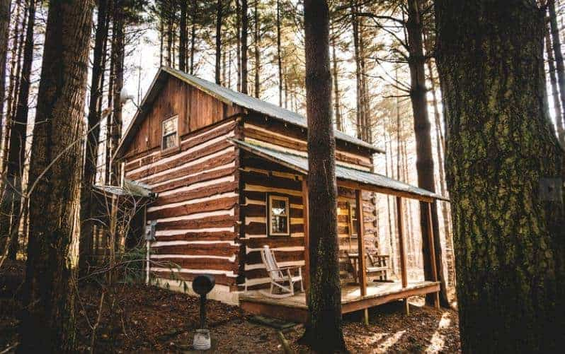 A cabin in the middle of a pine forest.
