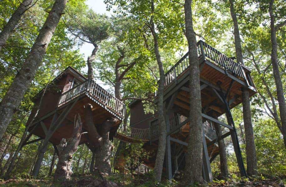 A look up the tall Seguin tree houses.