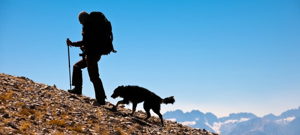 Hiker with backpack hiking with dog on trail.