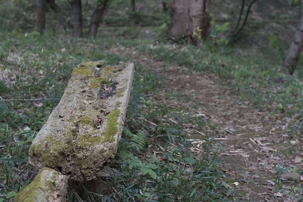 Old log along side of a trail that can be used for sitting.
