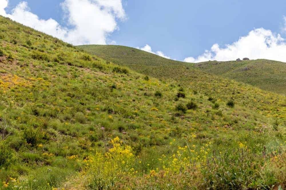 Green hill with yellow flowers.