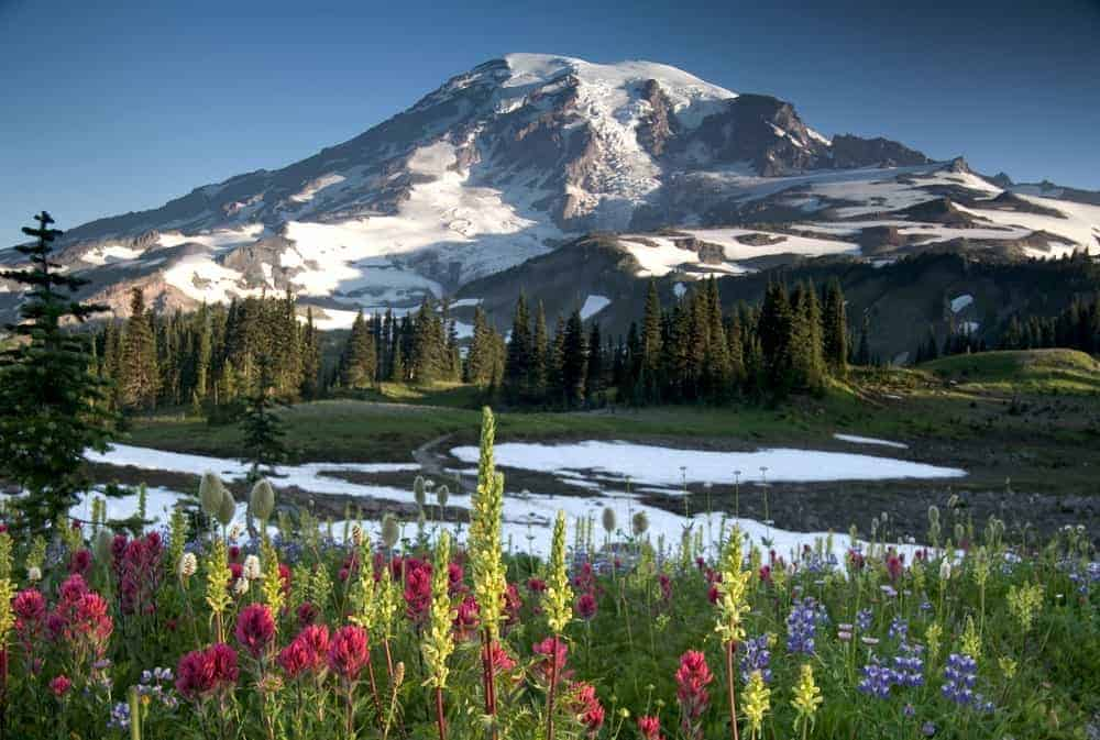 A view of the snow-covered Mt. Rainier from afar.