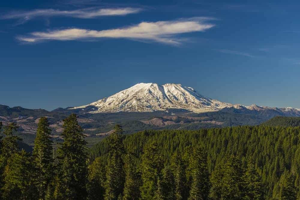 Mt. St. Helens seen from the forest of pines.