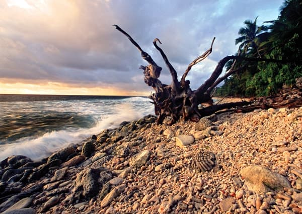 Pulu Keeling National Park's shoreline with a tree root wad.
