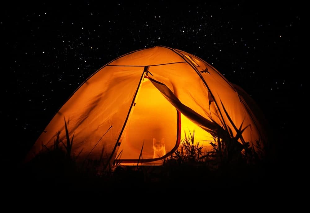 A tent in pitch darkness with a cat inside illuminated by a lantern at night.
