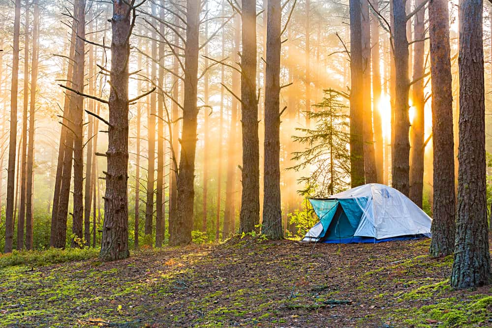 This is a single tent in a foggy forest scenery during sunrise.
