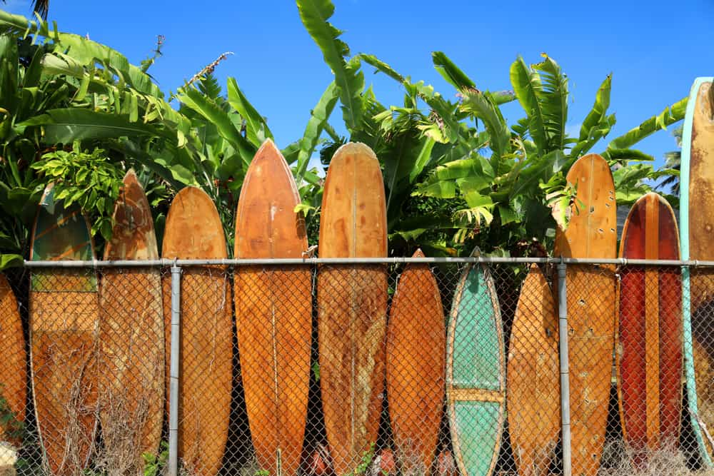 This is a close look at a row of vintage wooden surfboards in Oahu.