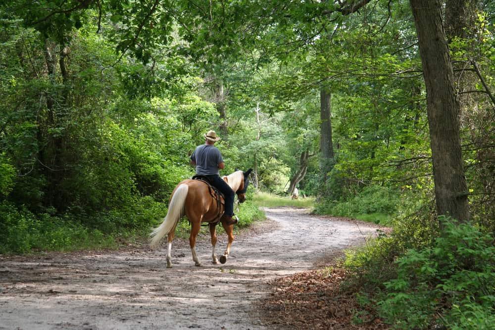 A man riding a horse on an equestrian trail.