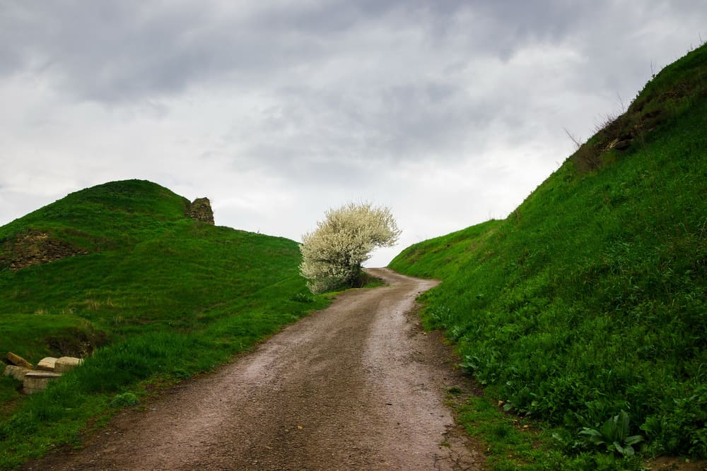 Dirt road flanked by green hills and a cherry tree in full bloom.